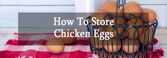 How to store chicken eggs