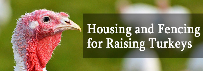 Housing and Fencing for Raising Turkeys