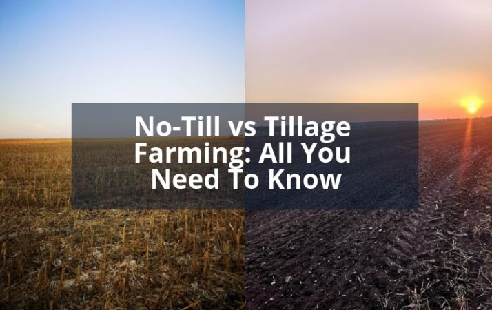 No-Till vs Tillage Farming: All You Need To Know