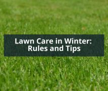 Lawn Care in Winter- Rules and Tips