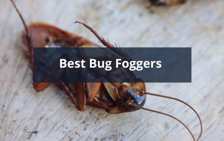 Best Bug Foggers