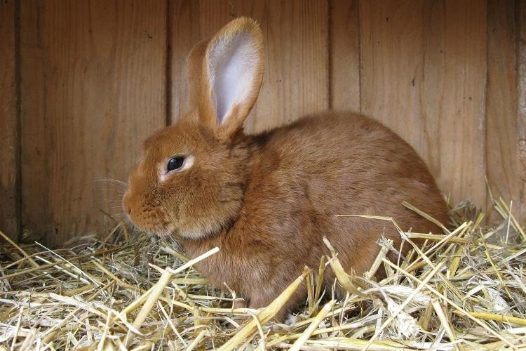 Hutches for Rabbits
