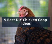9 Best DIY Chicken Coop Ideas