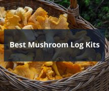 Best Mushroom Log Kits