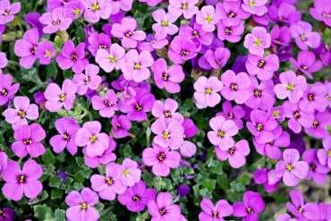 Fertilizer for Flowers
