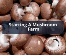 Starting A Mushroom Farm