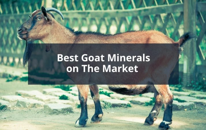 Best Goat Minerals on The Market