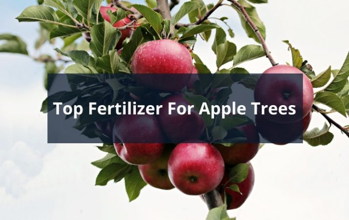 Top Fertilizer For Apple Trees