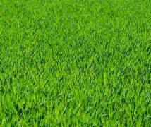 Best buffalo grass fertiliser reviews