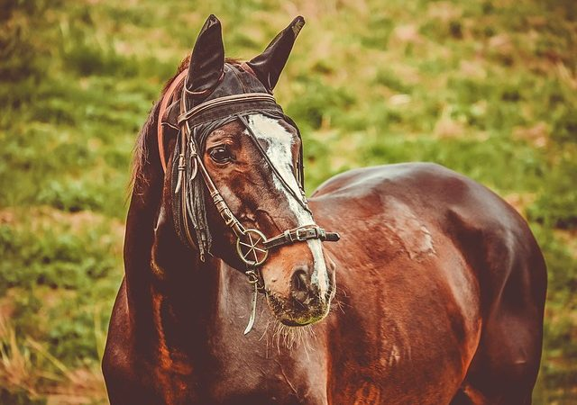 Best bitless bridle for strong horse