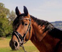 best horse calmer