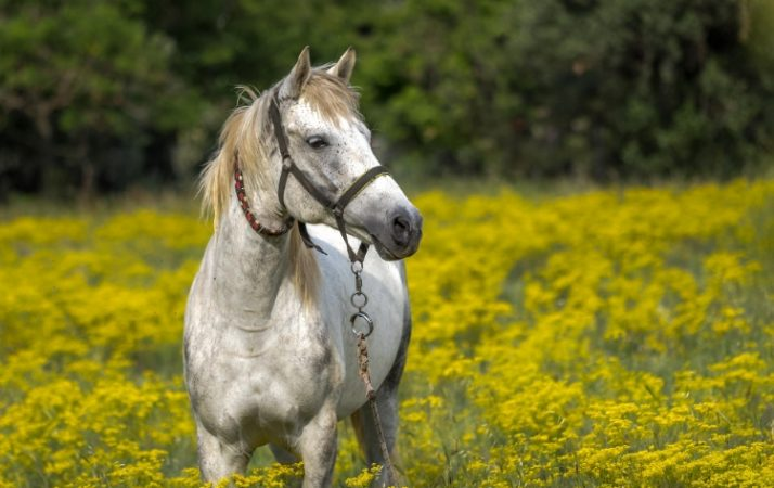 best magnesium supplement for horses