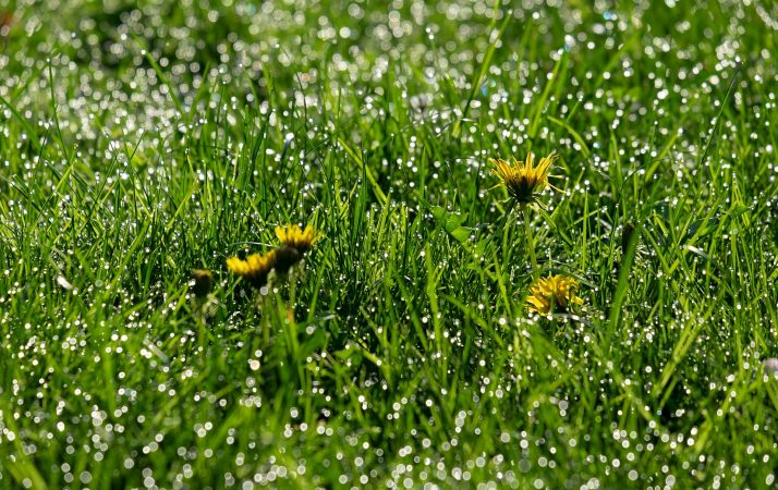 Best Weed Killer Spray For Lawns