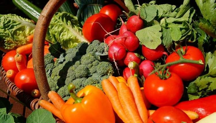 20-10-10 Fertilizer
