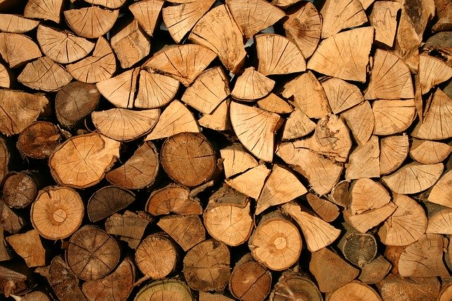 Top 10 Best Trees for Firewood