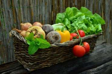 Fertilizers for a Healthy Garden