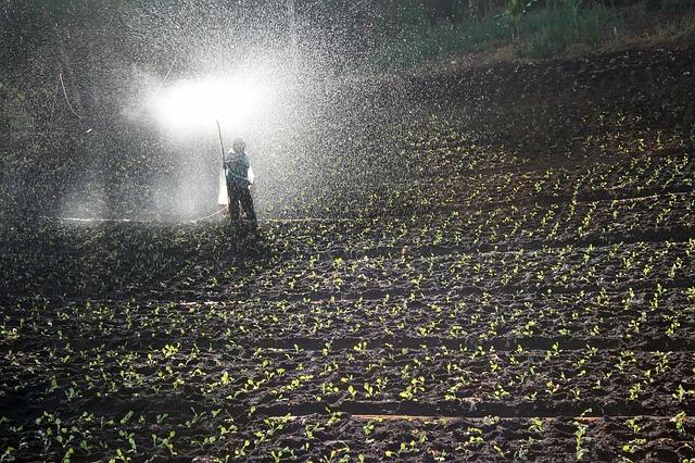 20-20-20 Fertilizer