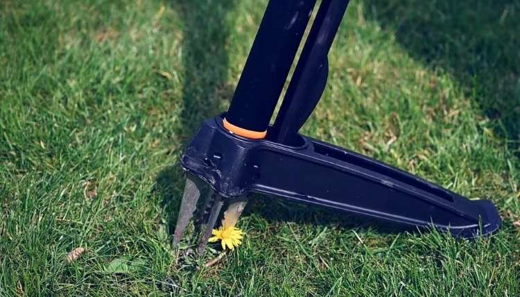 Tool for Pulling Weeds