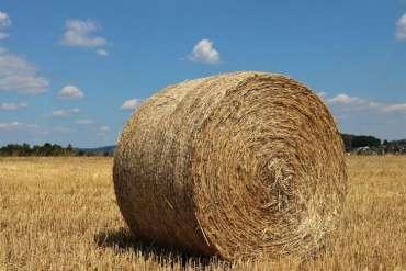 Round Bale Feeder for Cattle
