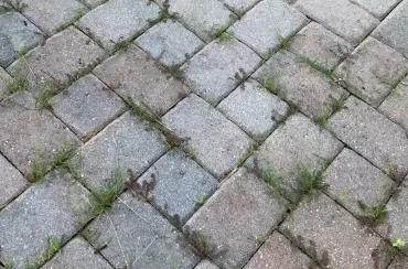 grass growth between paving tiles